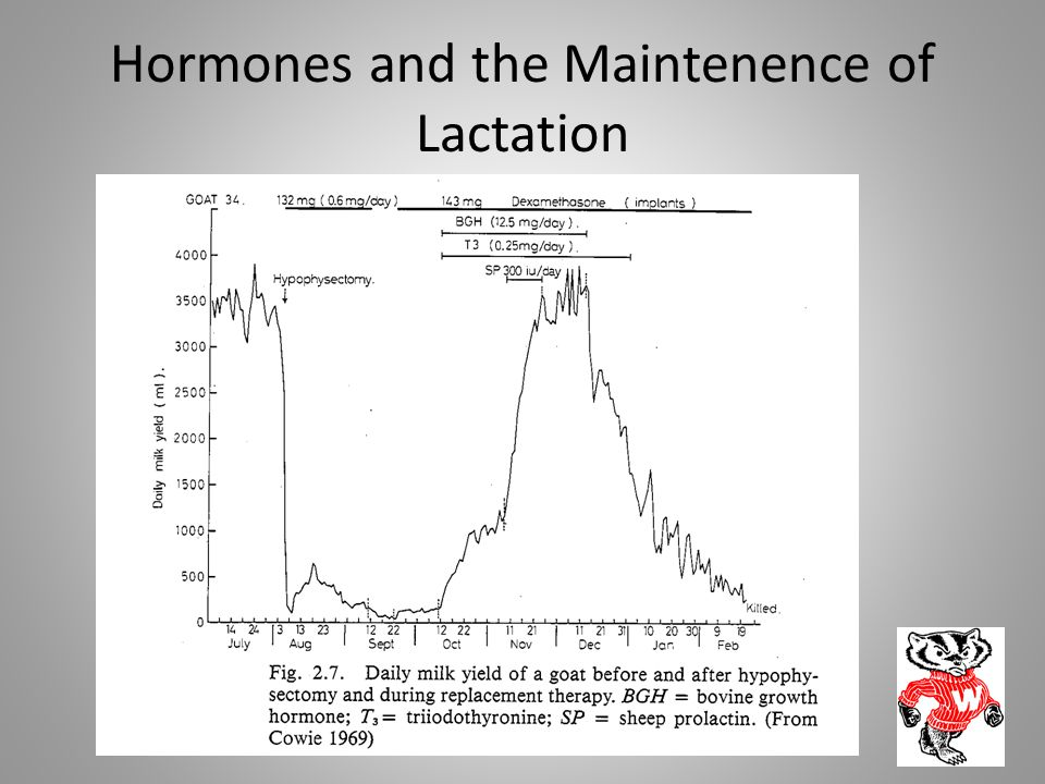 Hormones and the Maintenence of Lactation