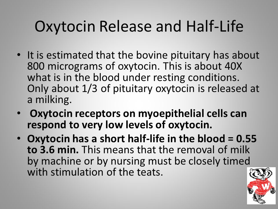 Oxytocin Release and Half-Life It is estimated that the bovine pituitary has about 800 micrograms of oxytocin. This is about 40X what is in the blood