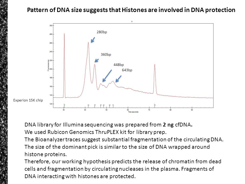 DNA library for Illumina sequencing was prepared from 2 ng cfDNA. We used Rubicon Genomics ThruPLEX kit for library prep. The Bioanalyzer traces sugge