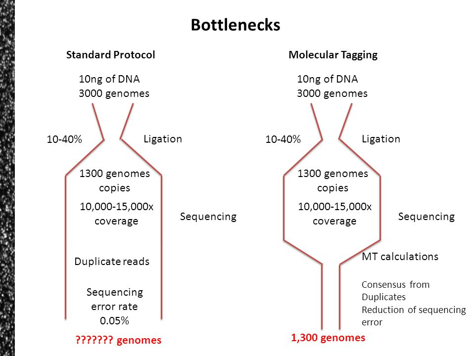 Bottlenecks 10ng of DNA 3000 genomes Ligation 10-40% 1300 genomes copies Sequencing 10,000-15,000x coverage Duplicate reads Sequencing error rate 0.05