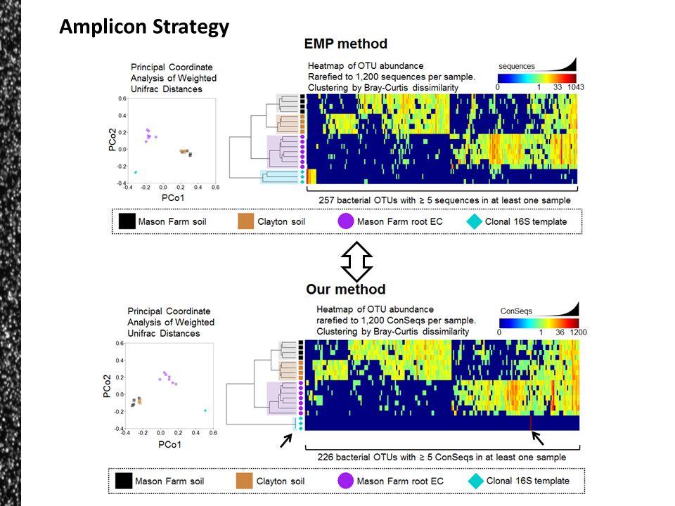 Amplicon Strategy