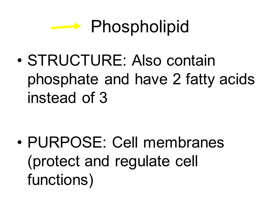 Phospholipid STRUCTURE: Also contain phosphate and have 2 fatty acids instead of 3 PURPOSE: Cell membranes (protect and regulate cell functions)