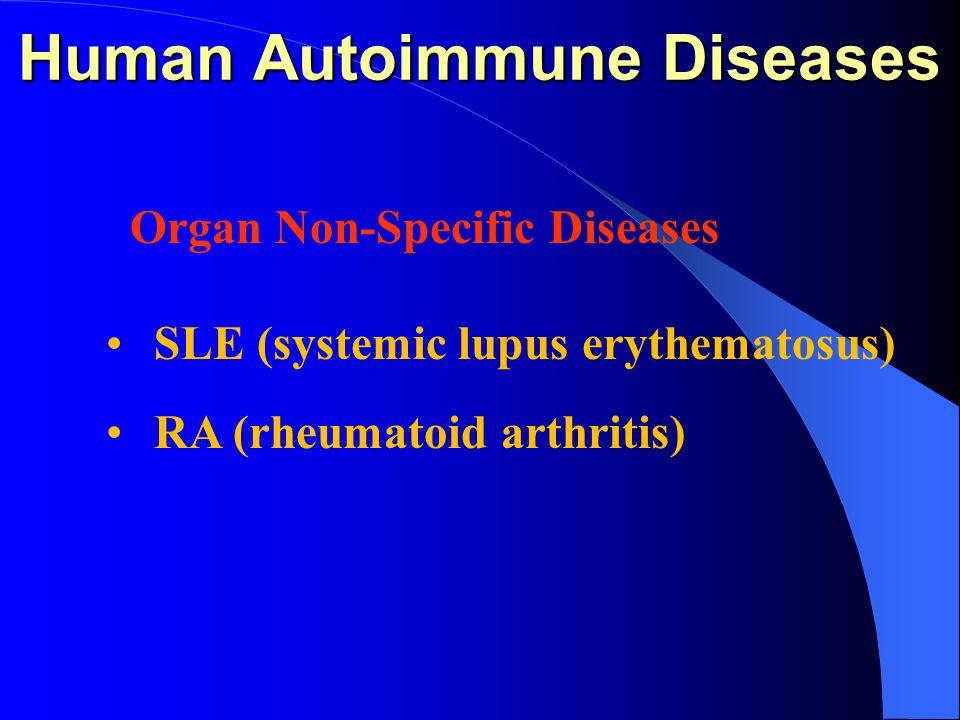 Human Autoimmune Diseases Organ Non-Specific Diseases SLE (systemic lupus erythematosus) RA (rheumatoid arthritis)