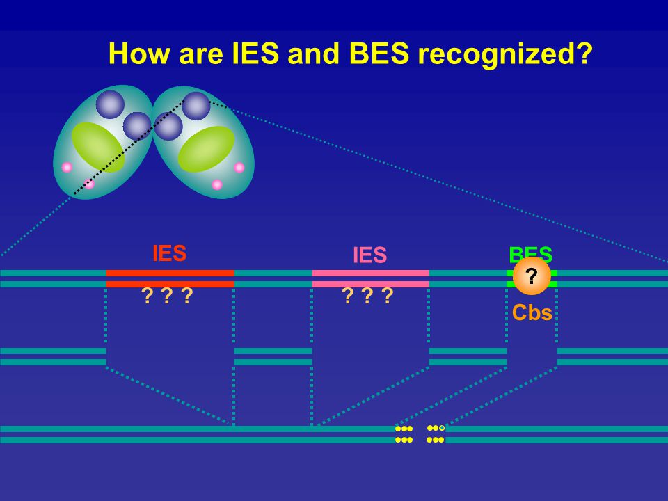 IESBES How are IES and BES recognized? Cbs ? IES ? ? ?