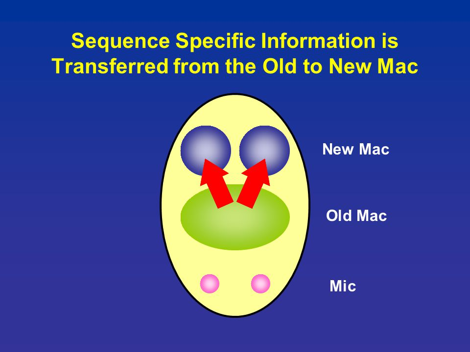 Sequence Specific Information is Transferred from the Old to New Mac Old Mac Mic New Mac