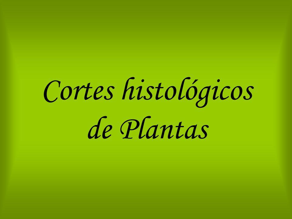 Cortes histológicos de Plantas