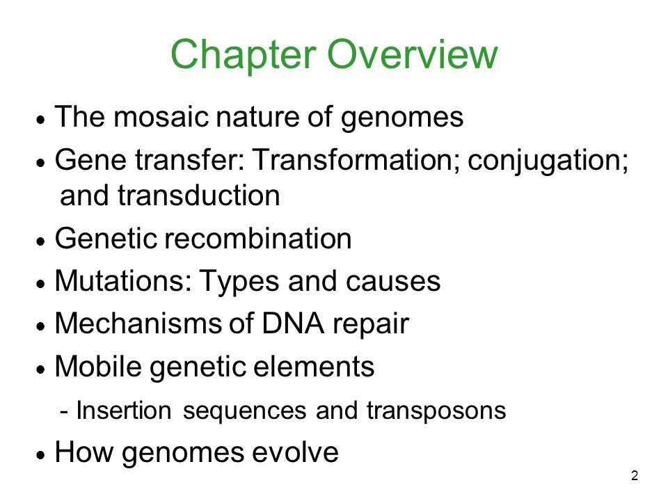 2 Chapter Overview ● The mosaic nature of genomes ● Gene transfer: Transformation; conjugation; and transduction ● Genetic recombination ● Mutations: Types and causes ● Mechanisms of DNA repair ● Mobile genetic elements - Insertion sequences and transposons ● How genomes evolve