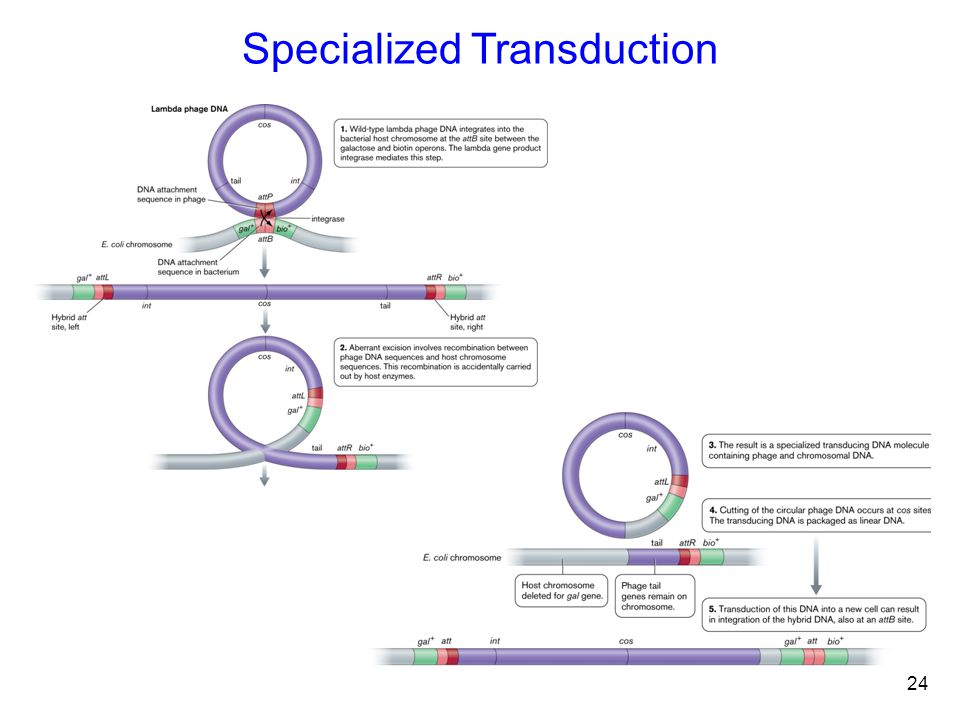 24 Specialized Transduction