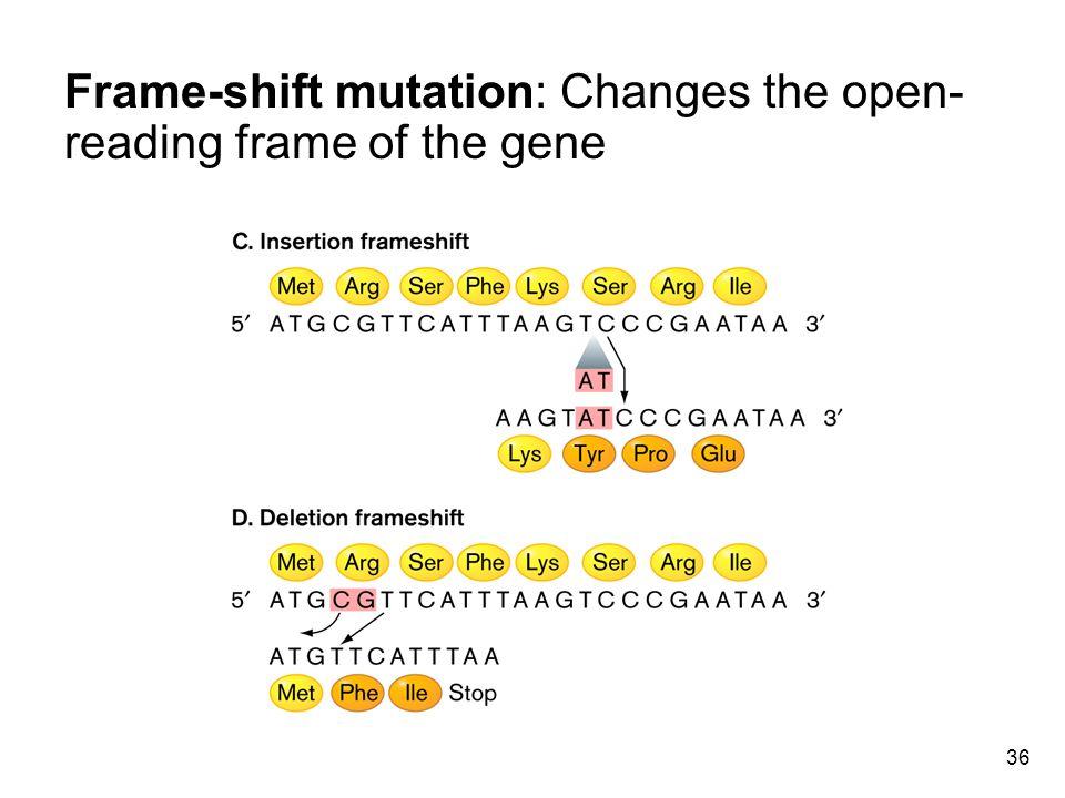 36 Frame-shift mutation: Changes the open- reading frame of the gene
