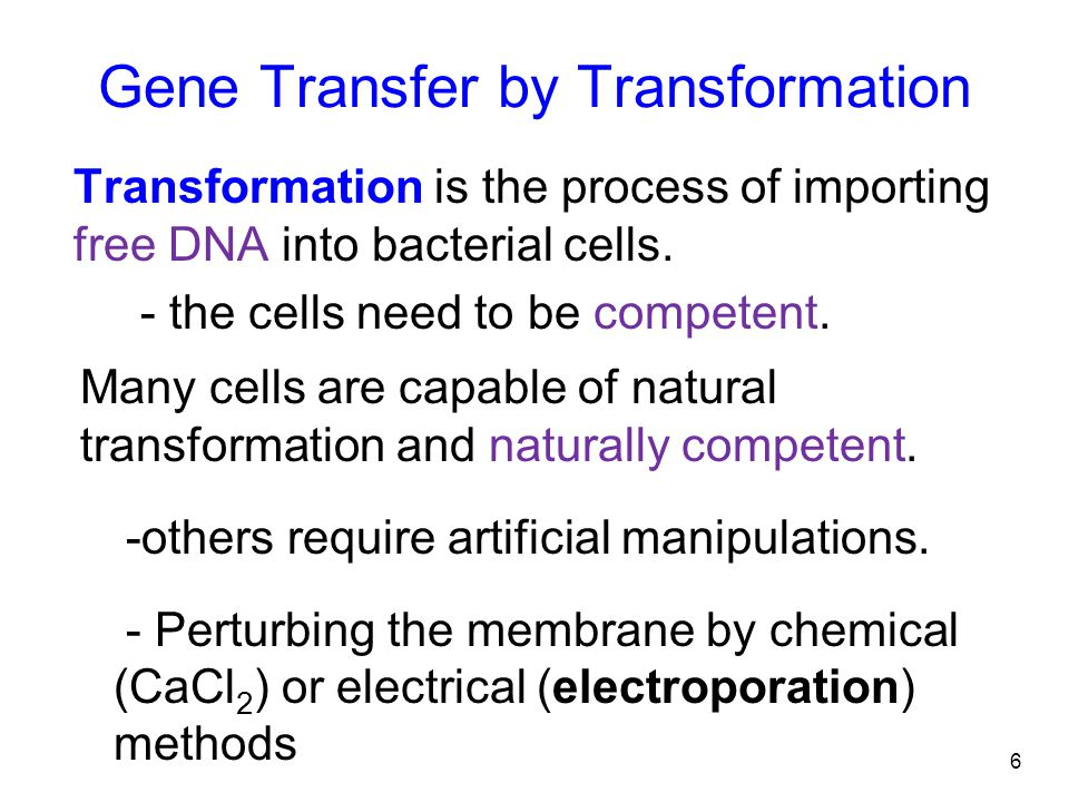 6 Gene Transfer by Transformation Transformation is the process of importing free DNA into bacterial cells.