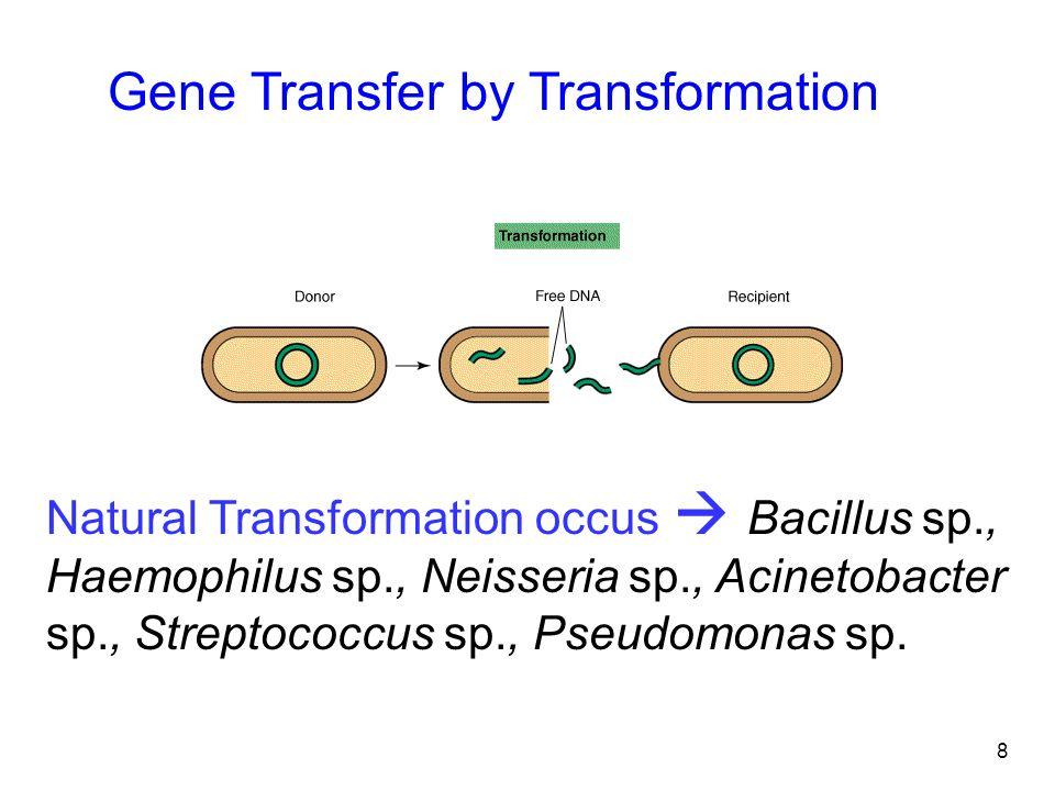 8 Natural Transformation occus  Bacillus sp., Haemophilus sp., Neisseria sp., Acinetobacter sp., Streptococcus sp., Pseudomonas sp. Gene Transfer by