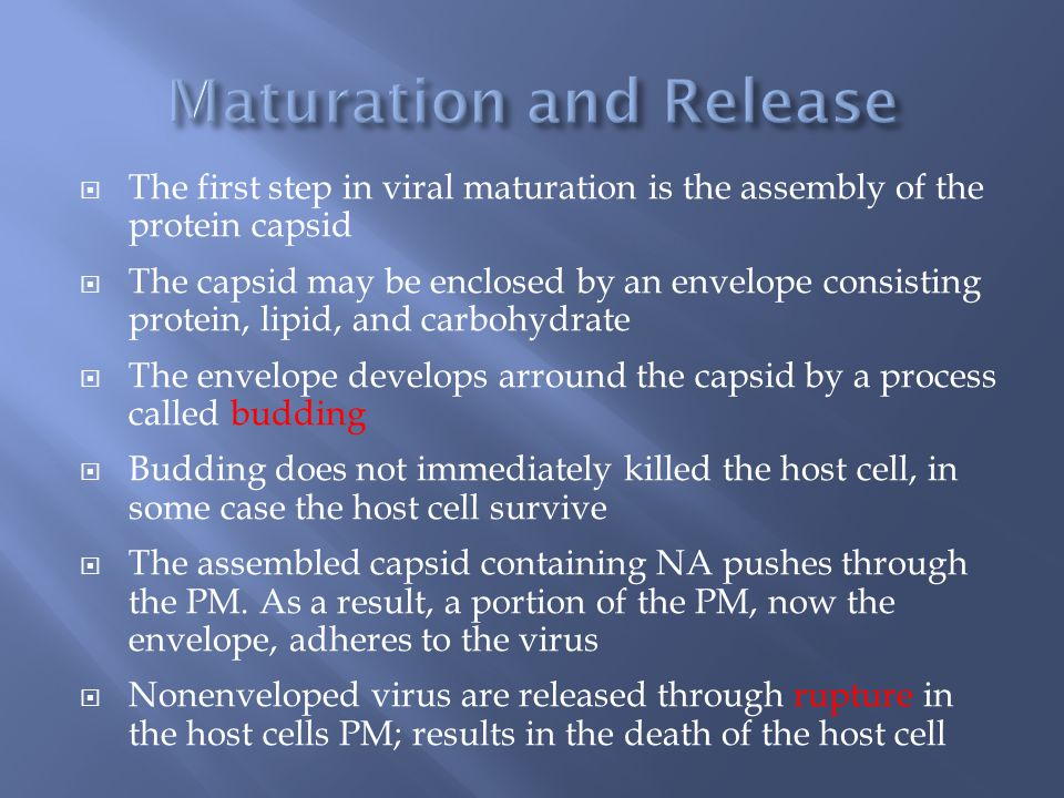 The first step in viral maturation is the assembly of the protein capsid  The capsid may be enclosed by an envelope consisting protein, lipid, and carbohydrate  The envelope develops arround the capsid by a process called budding  Budding does not immediately killed the host cell, in some case the host cell survive  The assembled capsid containing NA pushes through the PM.