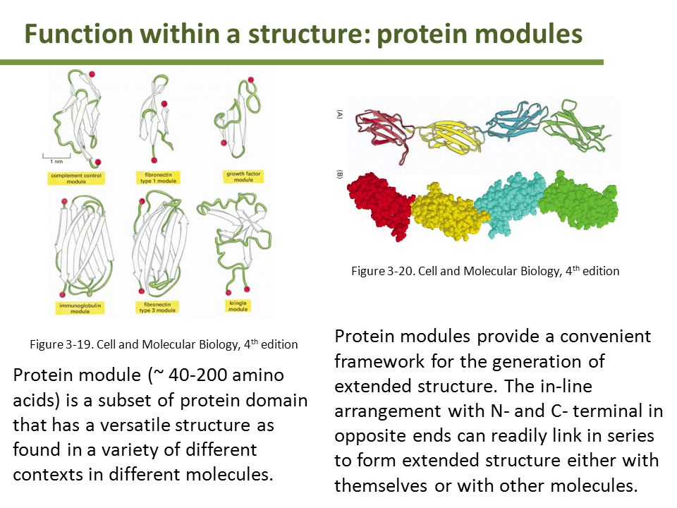 Function within a structure: protein modules Protein module (~ 40-200 amino acids) is a subset of protein domain that has a versatile structure as found in a variety of different contexts in different molecules.