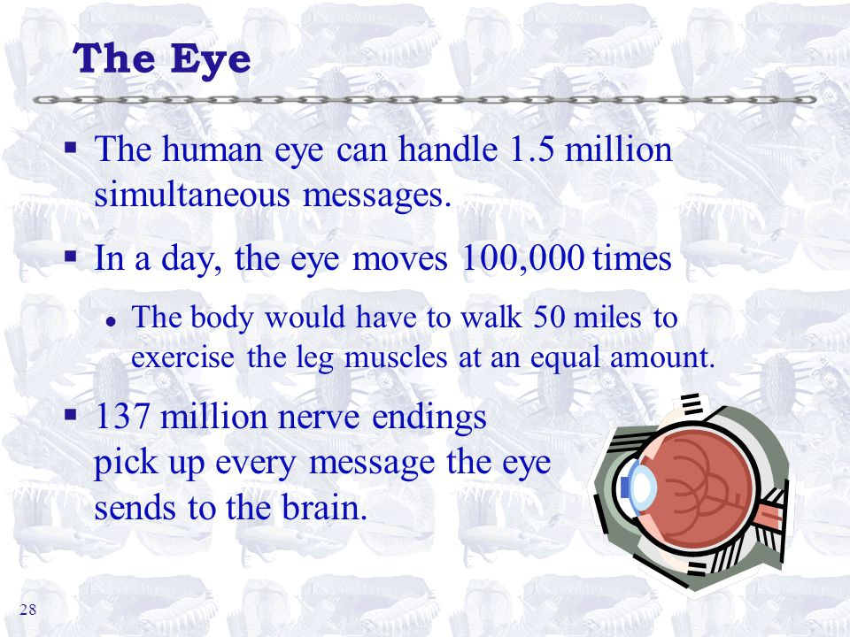 28 The Eye §The human eye can handle 1.5 million simultaneous messages.