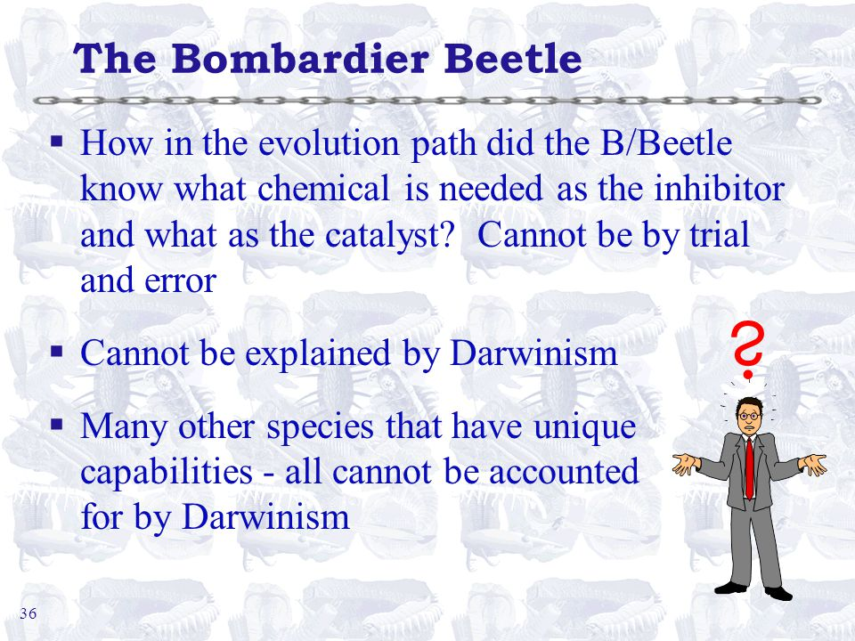 36 The Bombardier Beetle §How in the evolution path did the B/Beetle know what chemical is needed as the inhibitor and what as the catalyst.