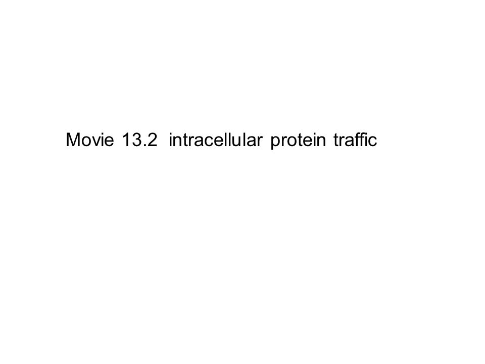 Movie 13.2 intracellular protein traffic