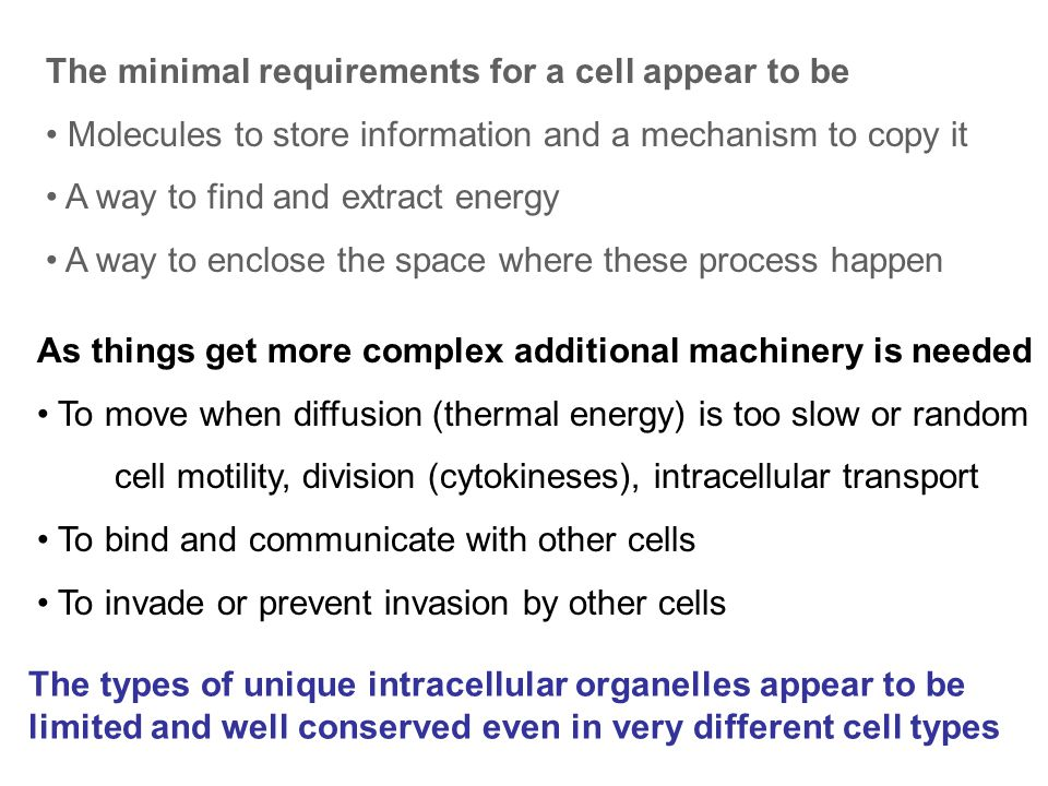 As things get more complex additional machinery is needed To move when diffusion (thermal energy) is too slow or random cell motility, division (cytokineses), intracellular transport To bind and communicate with other cells To invade or prevent invasion by other cells The types of unique intracellular organelles appear to be limited and well conserved even in very different cell types The minimal requirements for a cell appear to be Molecules to store information and a mechanism to copy it A way to find and extract energy A way to enclose the space where these process happen