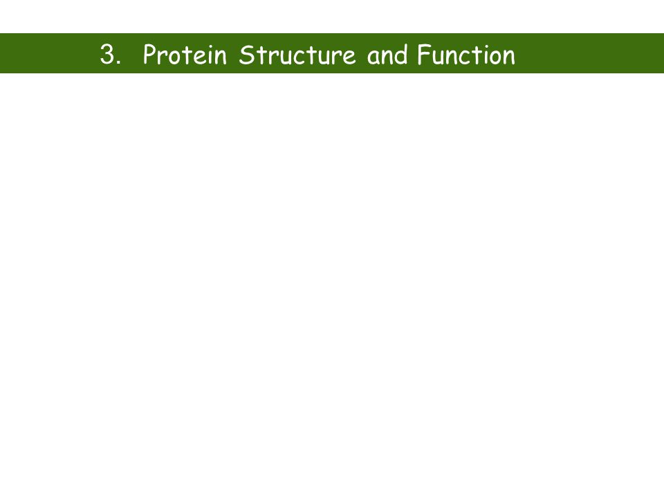 3. Protein Structure and Function