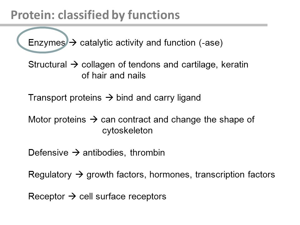 Protein: classified by functions Enzymes  catalytic activity and function (-ase) Structural  collagen of tendons and cartilage, keratin of hair and nails Transport proteins  bind and carry ligand Motor proteins  can contract and change the shape of cytoskeleton Defensive  antibodies, thrombin Regulatory  growth factors, hormones, transcription factors Receptor  cell surface receptors