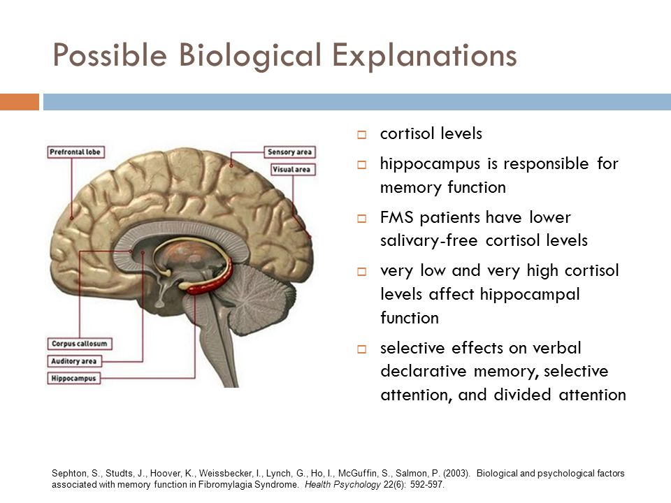 Possible Biological Explanations  cortisol levels  hippocampus is responsible for memory function  FMS patients have lower salivary-free cortisol levels  very low and very high cortisol levels affect hippocampal function  selective effects on verbal declarative memory, selective attention, and divided attention Sephton, S., Studts, J., Hoover, K., Weissbecker, I., Lynch, G., Ho, I., McGuffin, S., Salmon, P.