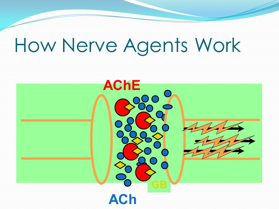 How Nerve Agents Work AChE ACh GB