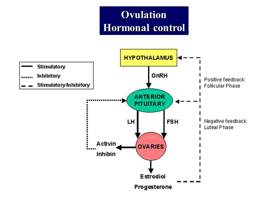 Ovulation Hormonal control