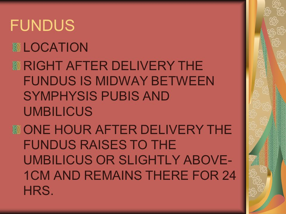 FUNDUS LOCATION RIGHT AFTER DELIVERY THE FUNDUS IS MIDWAY BETWEEN SYMPHYSIS PUBIS AND UMBILICUS ONE HOUR AFTER DELIVERY THE FUNDUS RAISES TO THE UMBILICUS OR SLIGHTLY ABOVE- 1CM AND REMAINS THERE FOR 24 HRS.