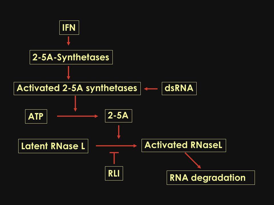 Endogenous retroviruses/Alu repetitive sequences PKR dysregulation in monocytes NF-κB / iNOS /COX2NO.