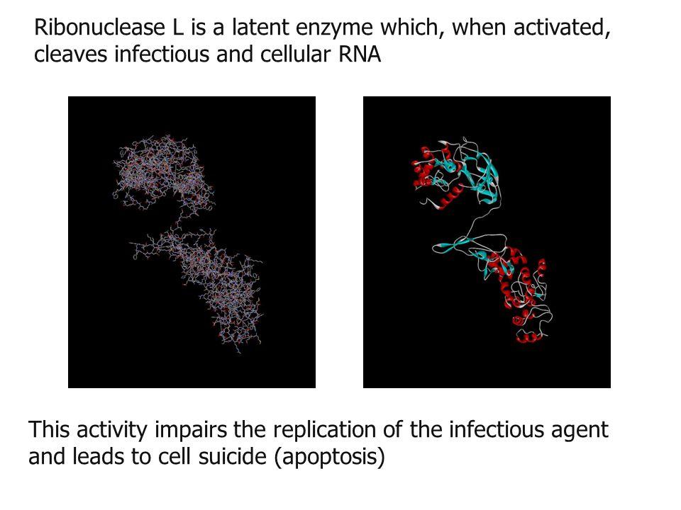 Proposed mechanism for CFIDS Onset factorsImmuneIntracellularBiological Symptoms predisp factorsalterationevents ________________________________________________________________________________________ 'cellular stress 'compromise viralT cell activationflu-like e.g.