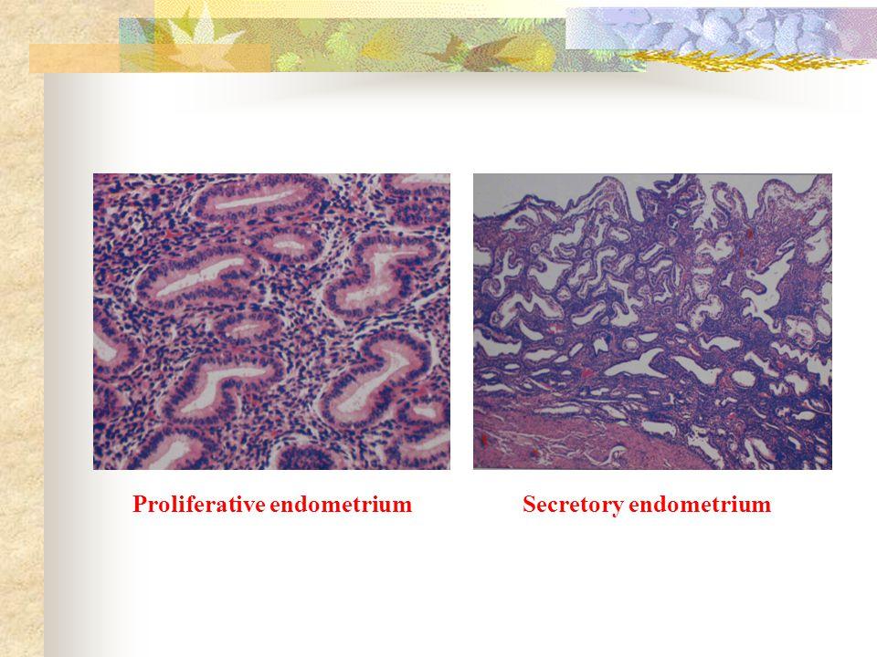 Proliferative endometriumSecretory endometrium