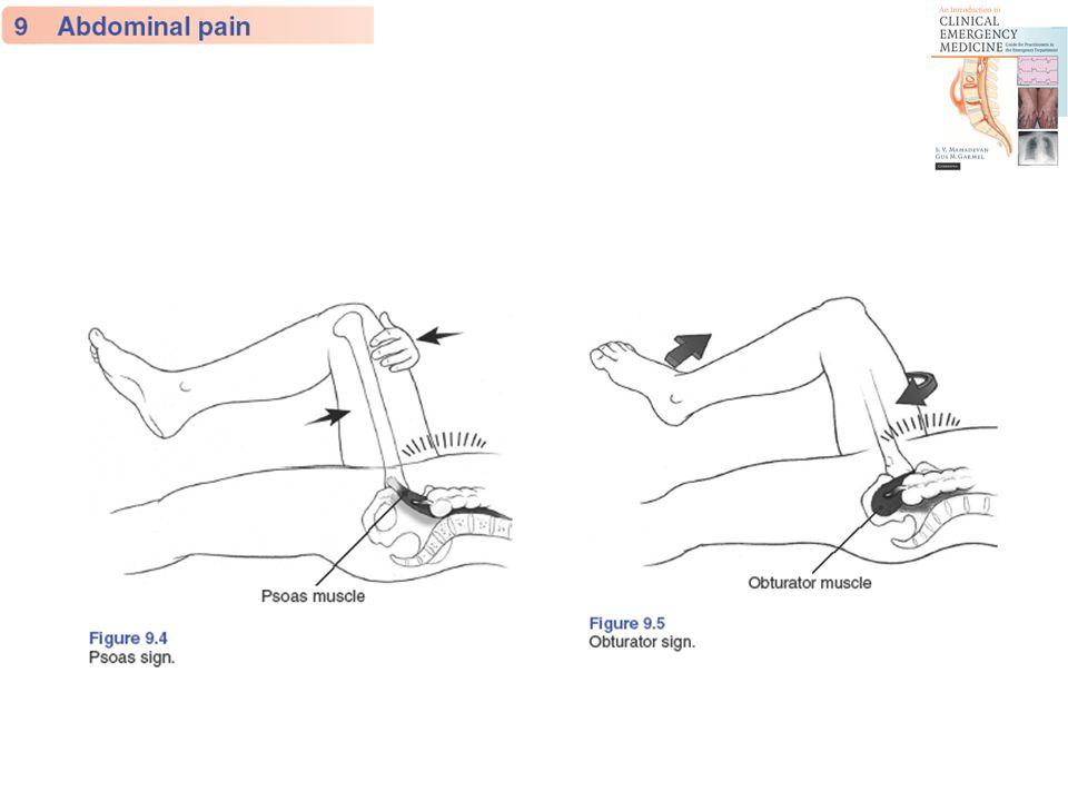 Physical Examination - Directed Pelvic Genital Back Rectal Head-to-toe