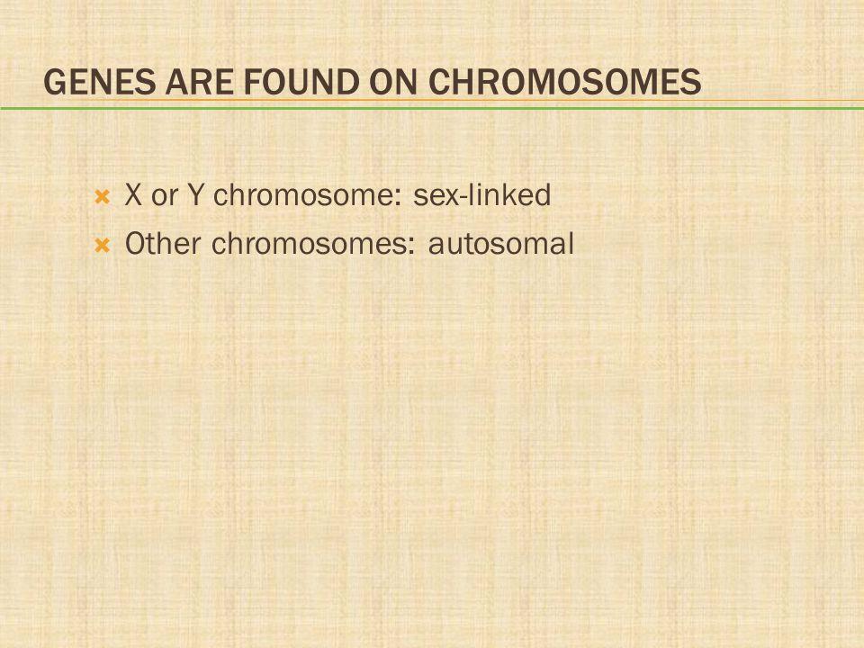 GENES ARE FOUND ON CHROMOSOMES  X or Y chromosome: sex-linked  Other chromosomes: autosomal