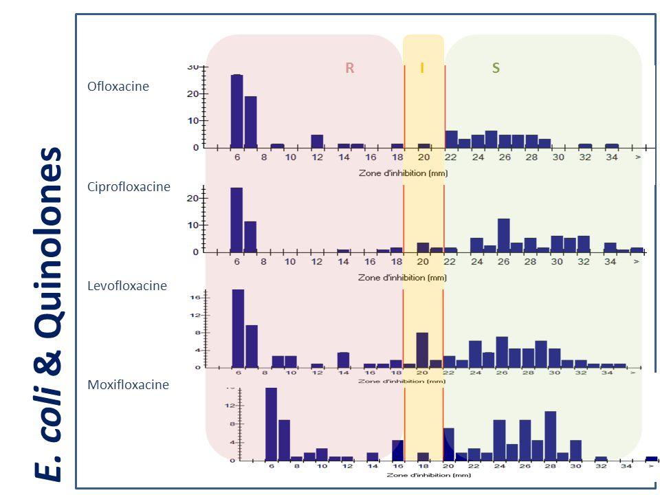 Ciprofloxacine Levofloxacine Moxifloxacine Ofloxacine RIS E. coli & Quinolones