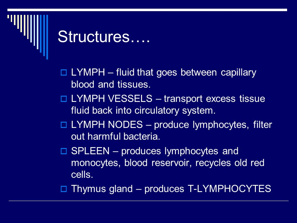 Structures….  LYMPH – fluid that goes between capillary blood and tissues.  LYMPH VESSELS – transport excess tissue fluid back into circulatory syst