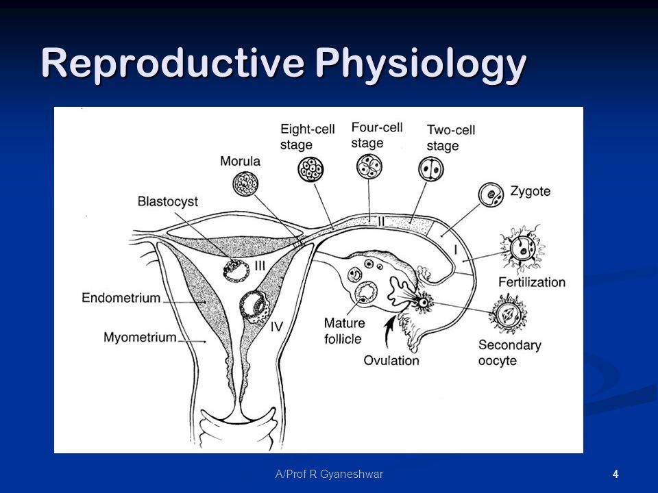 4A/Prof R Gyaneshwar Reproductive Physiology