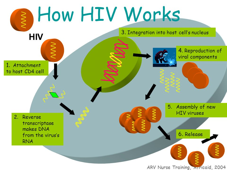 ARV Nurse Training, Africaid, 2004 How HIV Works HIV 1. Attachment to host CD4 cell 2.Reverse transcriptase makes DNA from the virus's RNA 3. Integrat