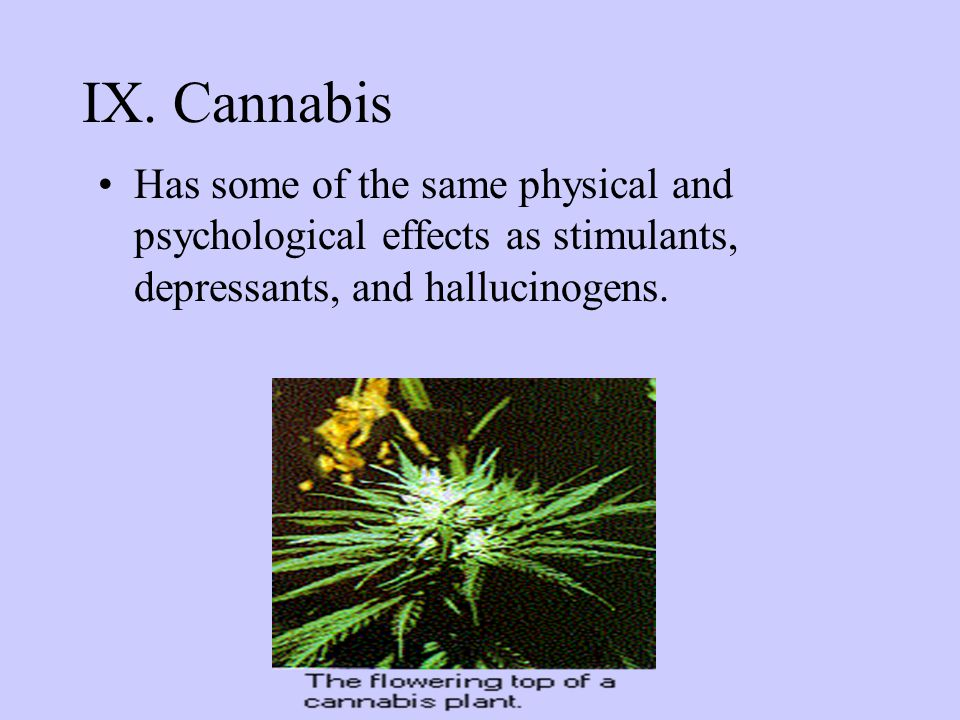 IX. Cannabis Has some of the same physical and psychological effects as stimulants, depressants, and hallucinogens.