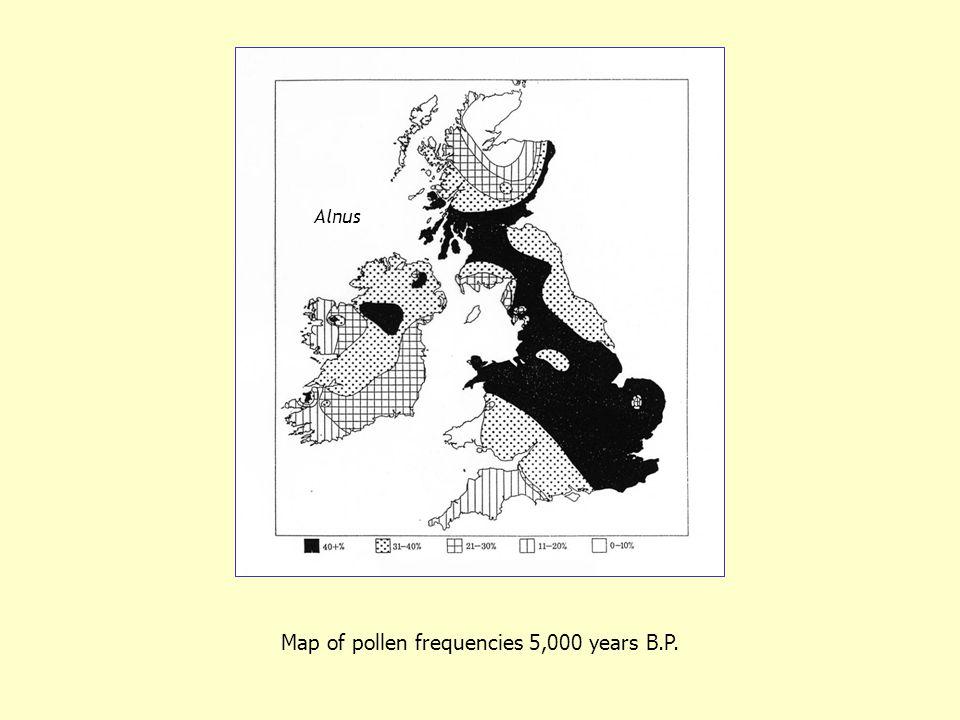 Map of pollen frequencies 5,000 years B.P. Alnus