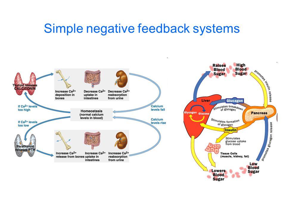 Negative feedback with cascading hormones