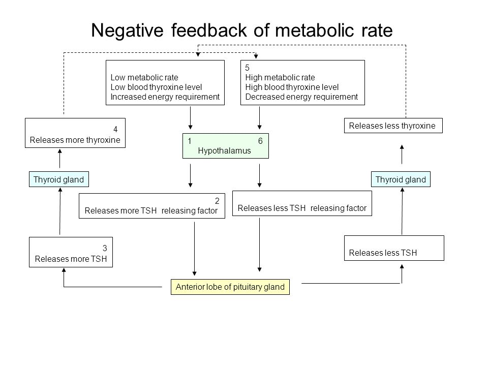 Negative feedback of metabolic rate 1.In the hypothalamus receptors 2.In response to this 3.Thyroid Stimulating Hormone (TSH) is carried where it causes an 4.Increased thyroxine causes thus increasing 5.This increased energy release causes an increase in t________ and is detected by the h______________ 6.Negative feedback is achieved by Factors like metabolic rate can only fluctuate within narrow limits because Other factors under negative feedback control include