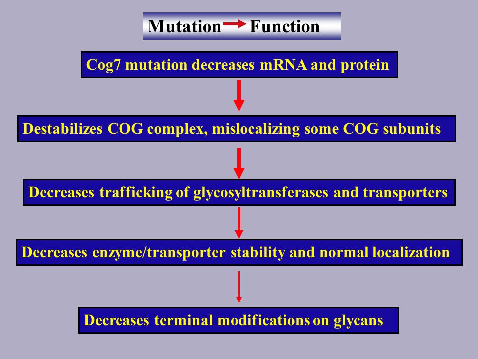 ldlB=Cog1 ldlC=Cog2 ldlB and ldlC deficient cells are defective in glycosylation