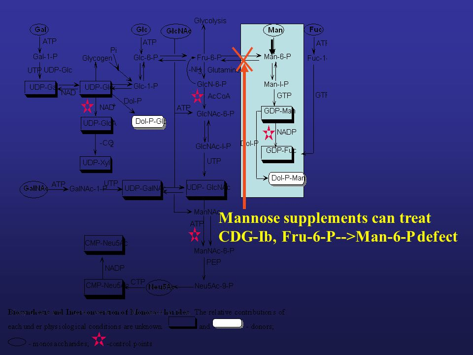 Mannose supplements can treat CDG-Ib, Fru-6-P-->Man-6-P defect