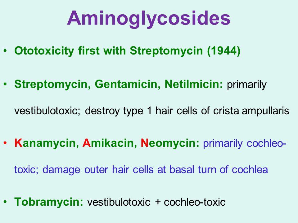 Aminoglycosides Ototoxicity first with Streptomycin (1944) Streptomycin, Gentamicin, Netilmicin: primarily vestibulotoxic; destroy type 1 hair cells o