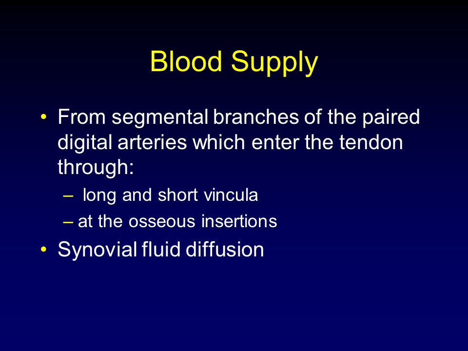 Blood Supply From segmental branches of the paired digital arteries which enter the tendon through: – long and short vincula –at the osseous insertion