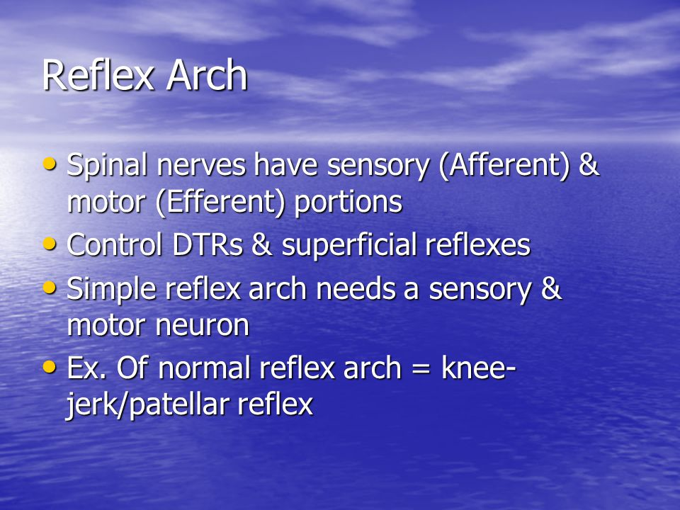 Reflex Arch Spinal nerves have sensory (Afferent) & motor (Efferent) portions Spinal nerves have sensory (Afferent) & motor (Efferent) portions Control DTRs & superficial reflexes Control DTRs & superficial reflexes Simple reflex arch needs a sensory & motor neuron Simple reflex arch needs a sensory & motor neuron Ex.