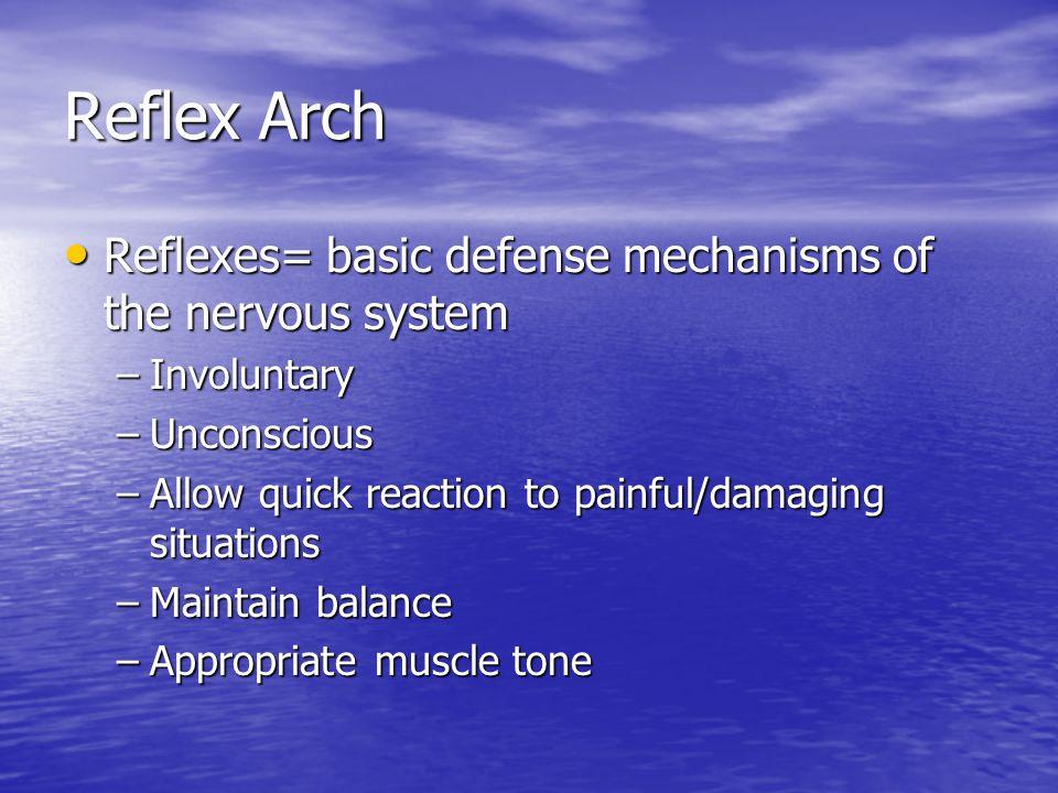 Reflex Arch Reflexes= basic defense mechanisms of the nervous system Reflexes= basic defense mechanisms of the nervous system –Involuntary –Unconsciou