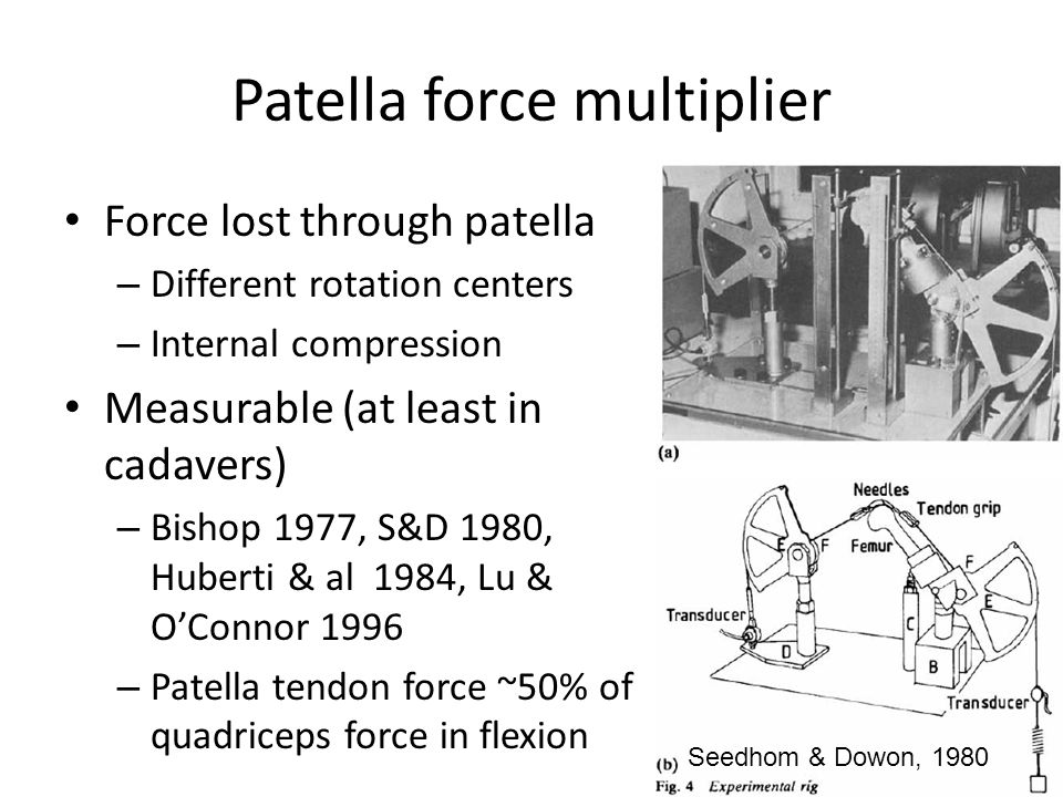 Patella force multiplier Force lost through patella – Different rotation centers – Internal compression Measurable (at least in cadavers) – Bishop 1977, S&D 1980, Huberti & al 1984, Lu & O'Connor 1996 – Patella tendon force ~50% of quadriceps force in flexion Seedhom & Dowon, 1980