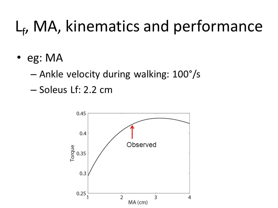 L f, MA, kinematics and performance eg: MA – Ankle velocity during walking: 100°/s – Soleus Lf: 2.2 cm Observed