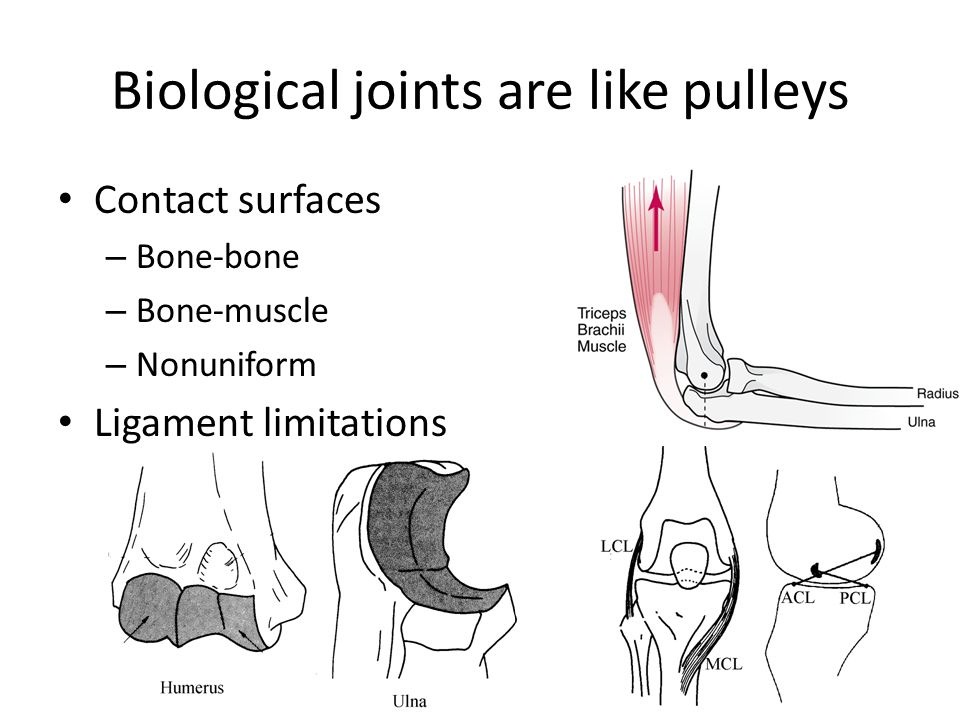 Biological joints are like pulleys Contact surfaces – Bone-bone – Bone-muscle – Nonuniform Ligament limitations