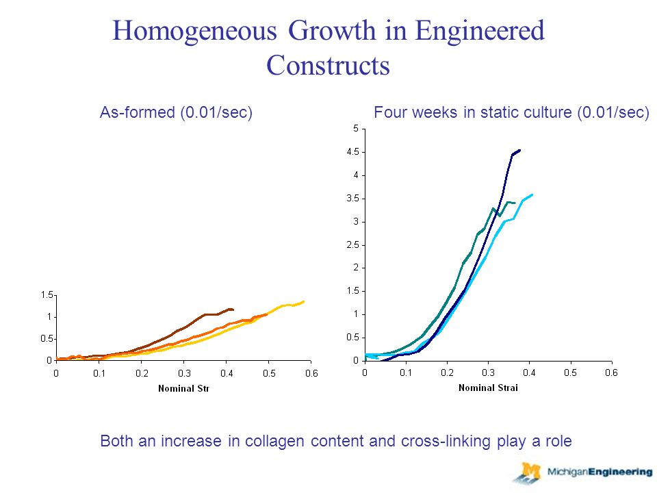 Homogeneous Growth in Engineered Constructs As-formed (0.01/sec)Four weeks in static culture (0.01/sec) Both an increase in collagen content and cross-linking play a role